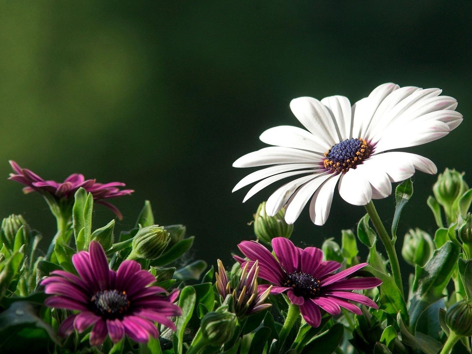 Flowers nature plant beautiful green flower wallpaper | 1600x1200 | 450960 | WallpaperUP