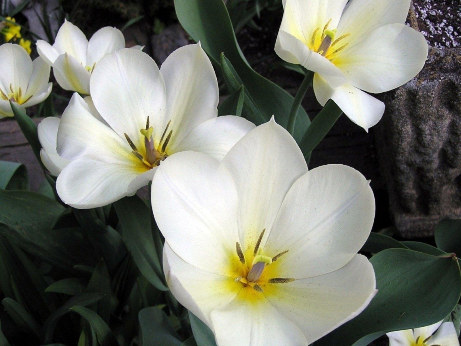 Виды белых цветов