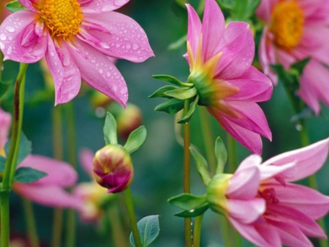 flowers nature plant beautiful plant green red yellow pink blue wallpaper