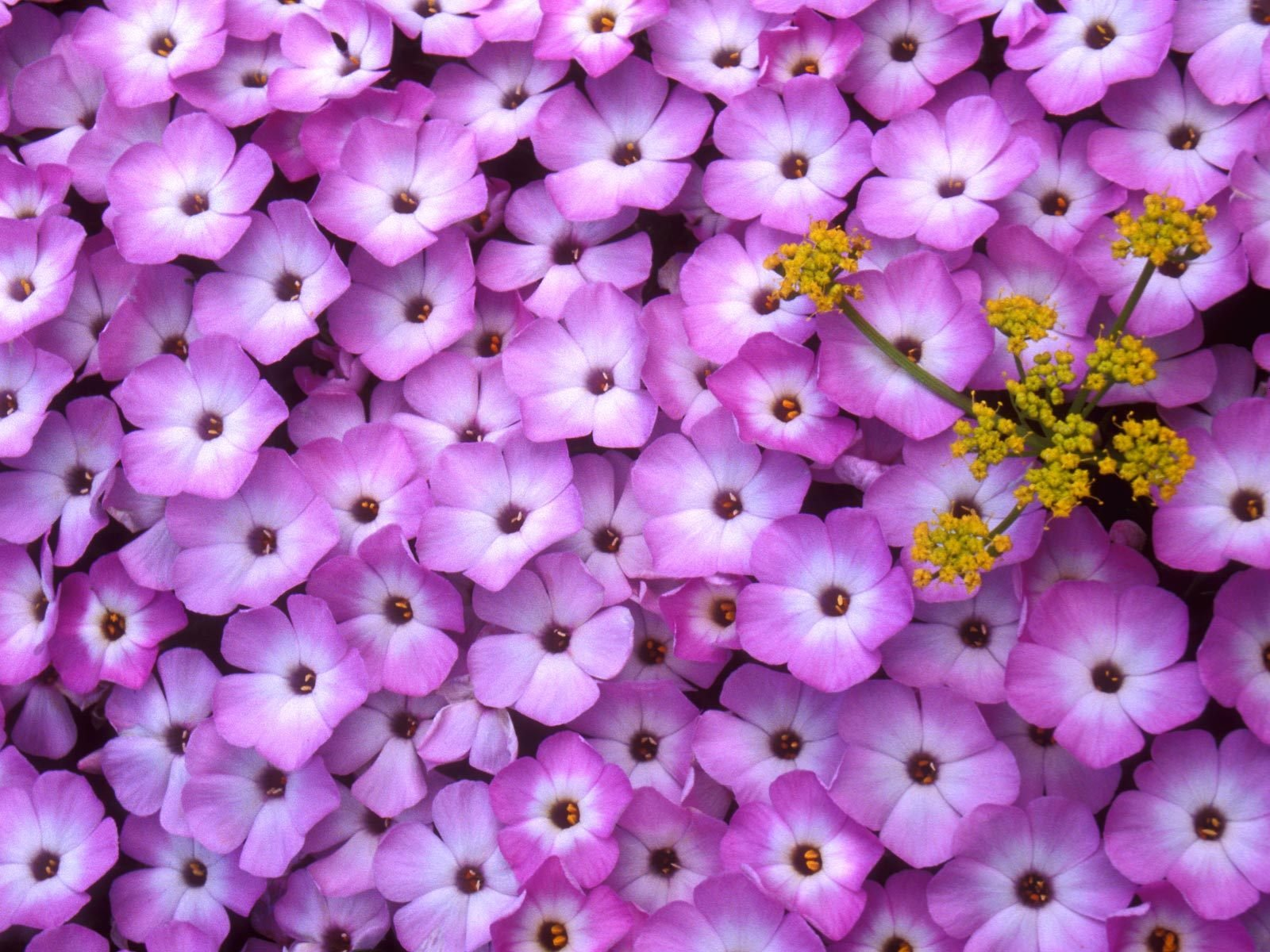 Beautiful Plants And Flowers Flowers Nature Plant Beautiful