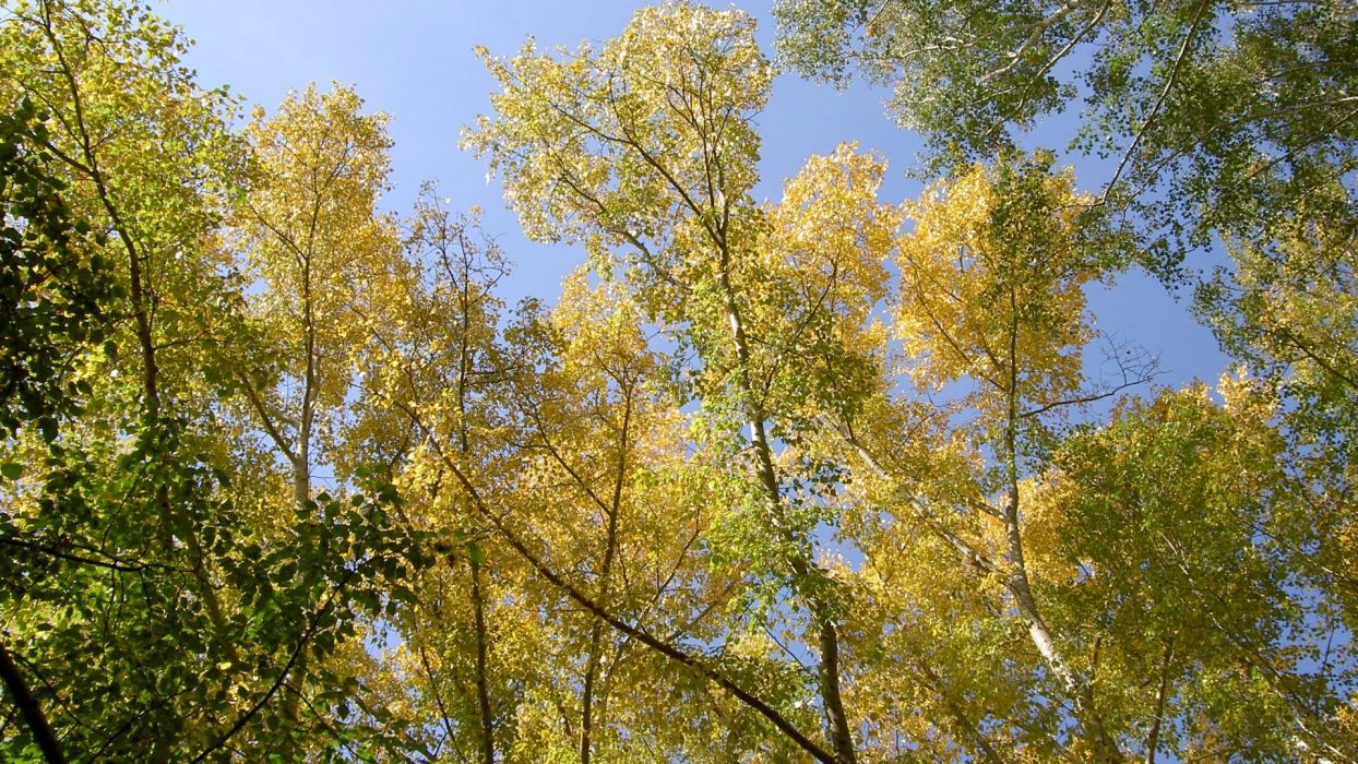 trees nature plant green forrest wood woods tree wild leaves yellow colors wallpaper