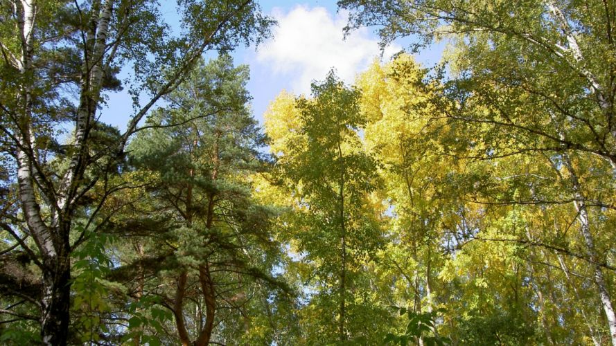 trees nature plant tree woods green yellow colors forest wood wallpaper