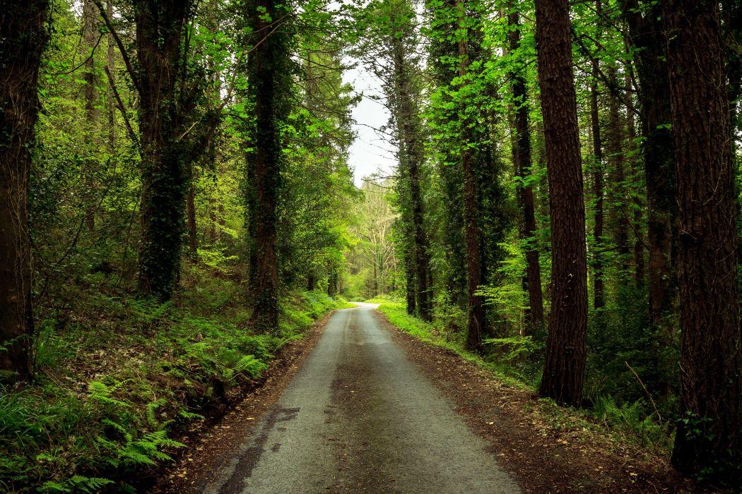 forest road trees landscape wallpaper