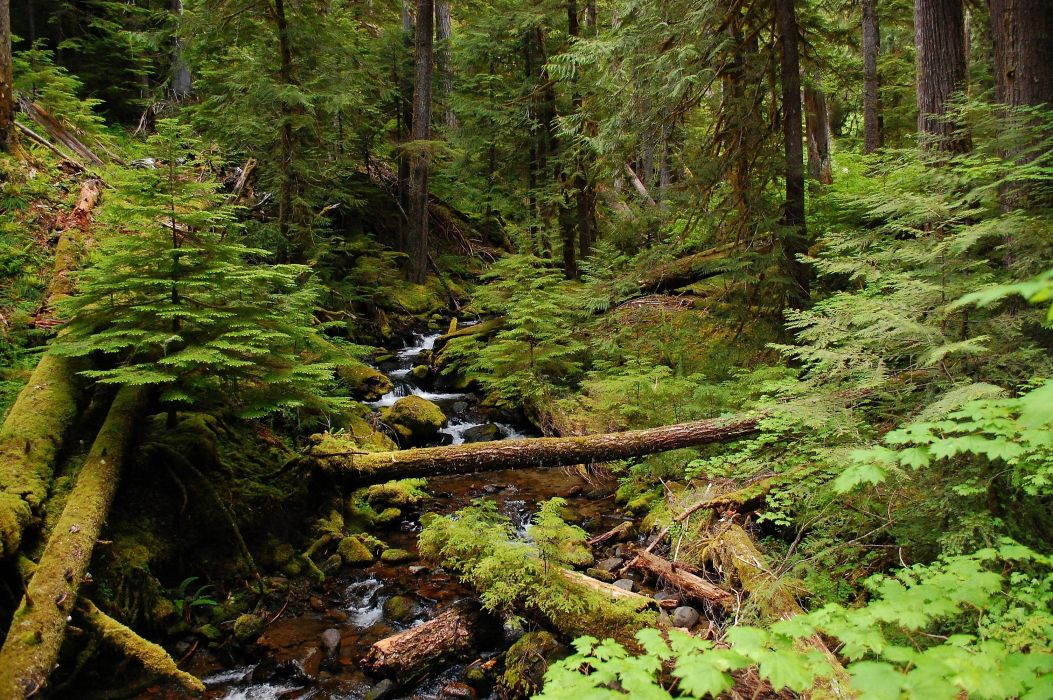 forest trees river creek nature wallpaper