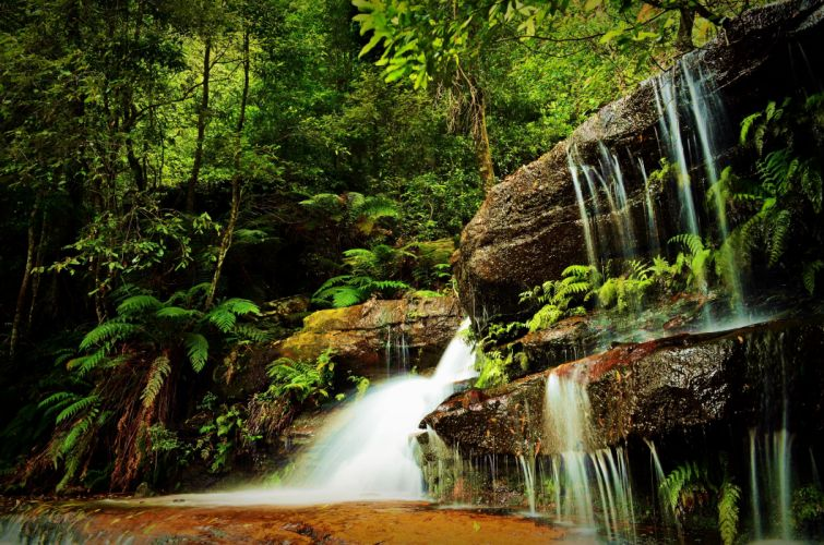 forest waterfall trees nature wallpaper