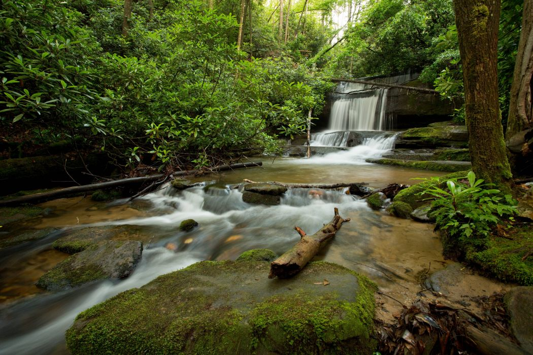 forest trees nature waterfall wallpaper