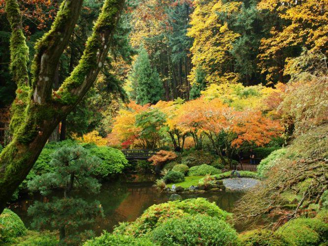USA Garden Autumn Portland Japanese Shrubs Trees Nature wallpaper