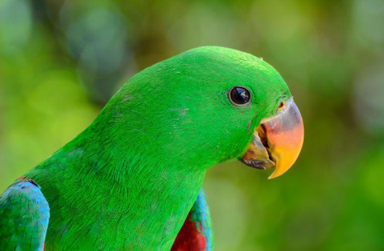 parrot bird beak wallpaper