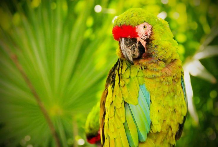 parrot macaw bird wallpaper