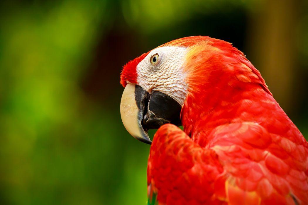 green macaw parrot macaw bird wallpaper