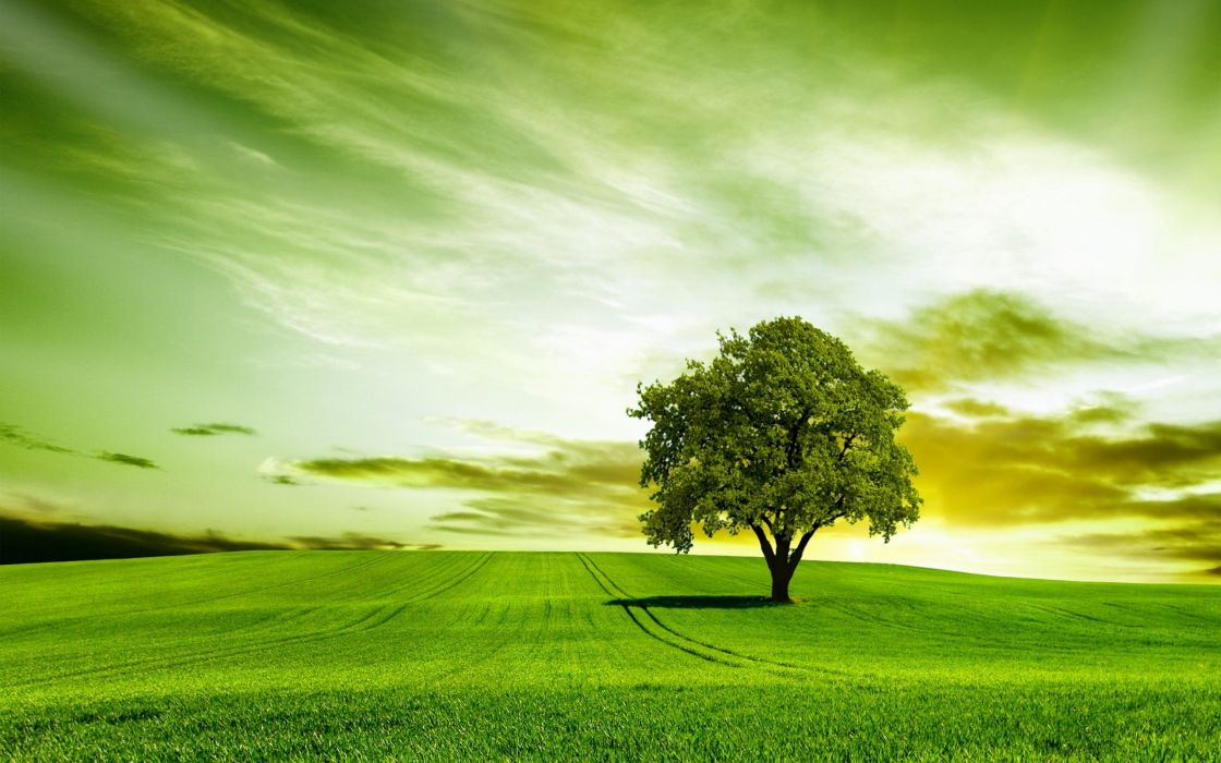 green tree nature sky wallpaper
