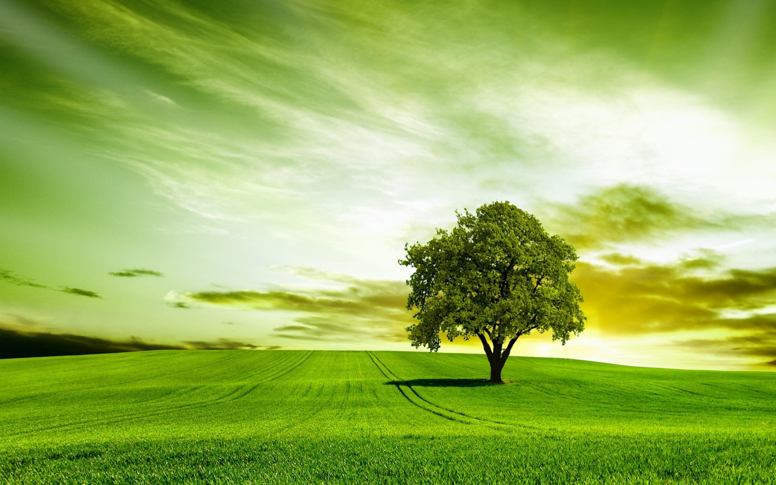 Green tree nature sky wallpaper 2560x1600 454898 - Nature wallpaper 2560x1600 ...