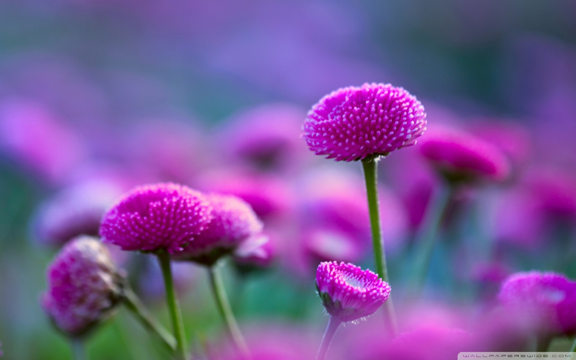 Beautiful Plants And Flowers Flower Beautiful Nature Plant