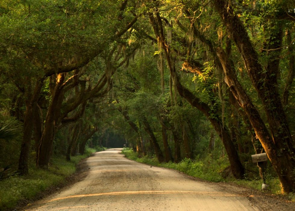 landscapes forest tree green nature amazing Road wallpaper