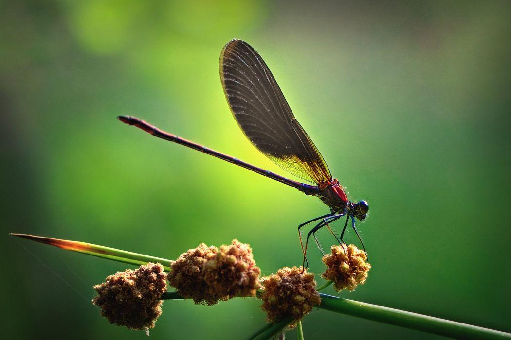 macro nature insect wallpaper