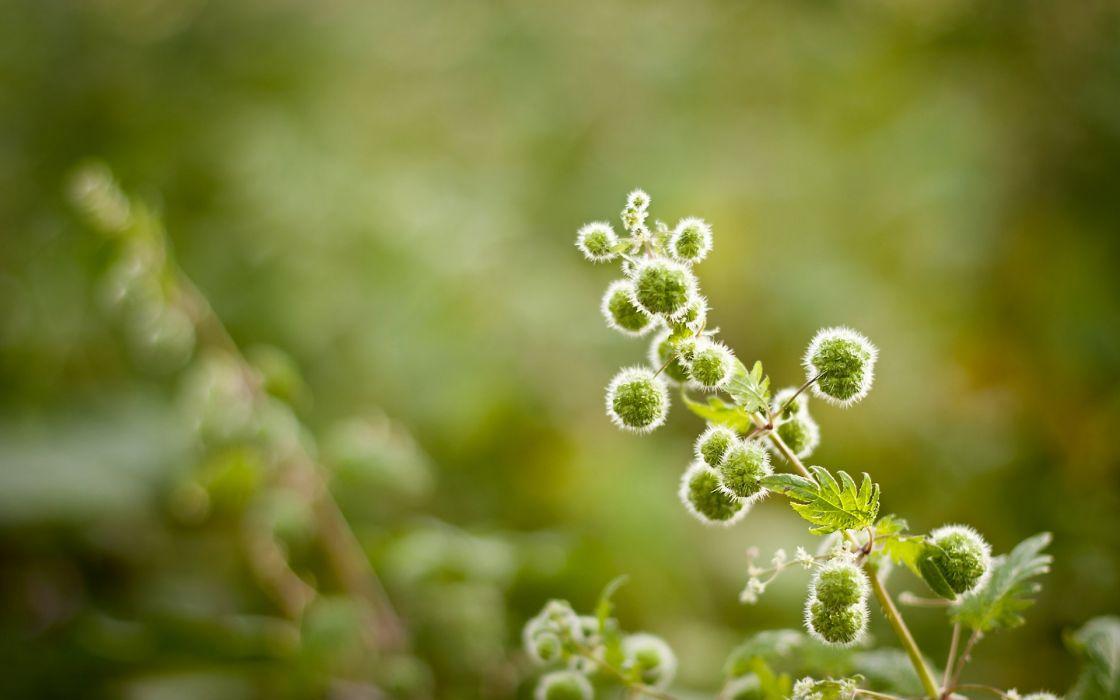 macro nature plant green wallpaper