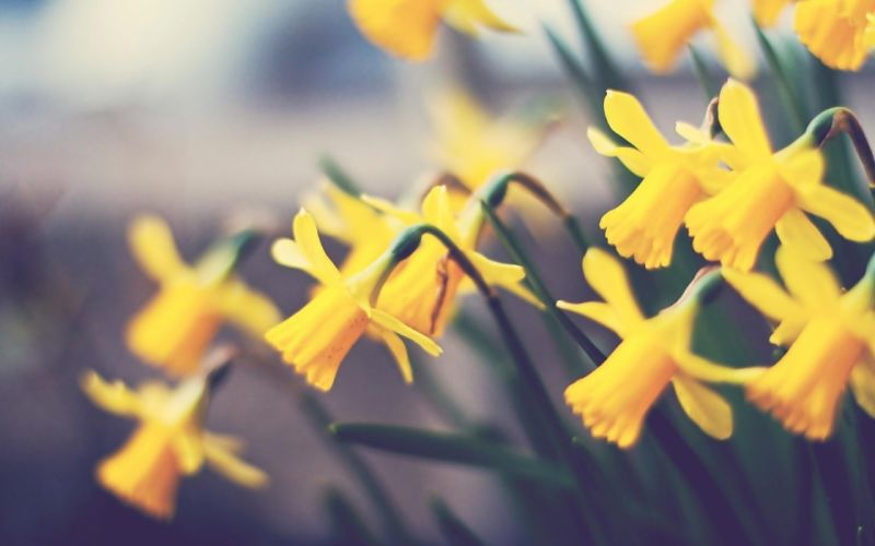 flowers nature macro yellow wallpaper