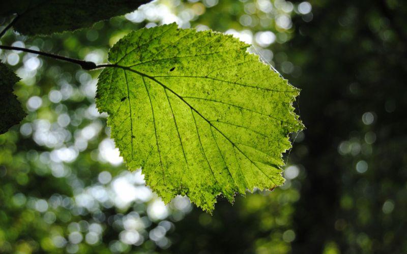 leaf green nature macro wallpaper