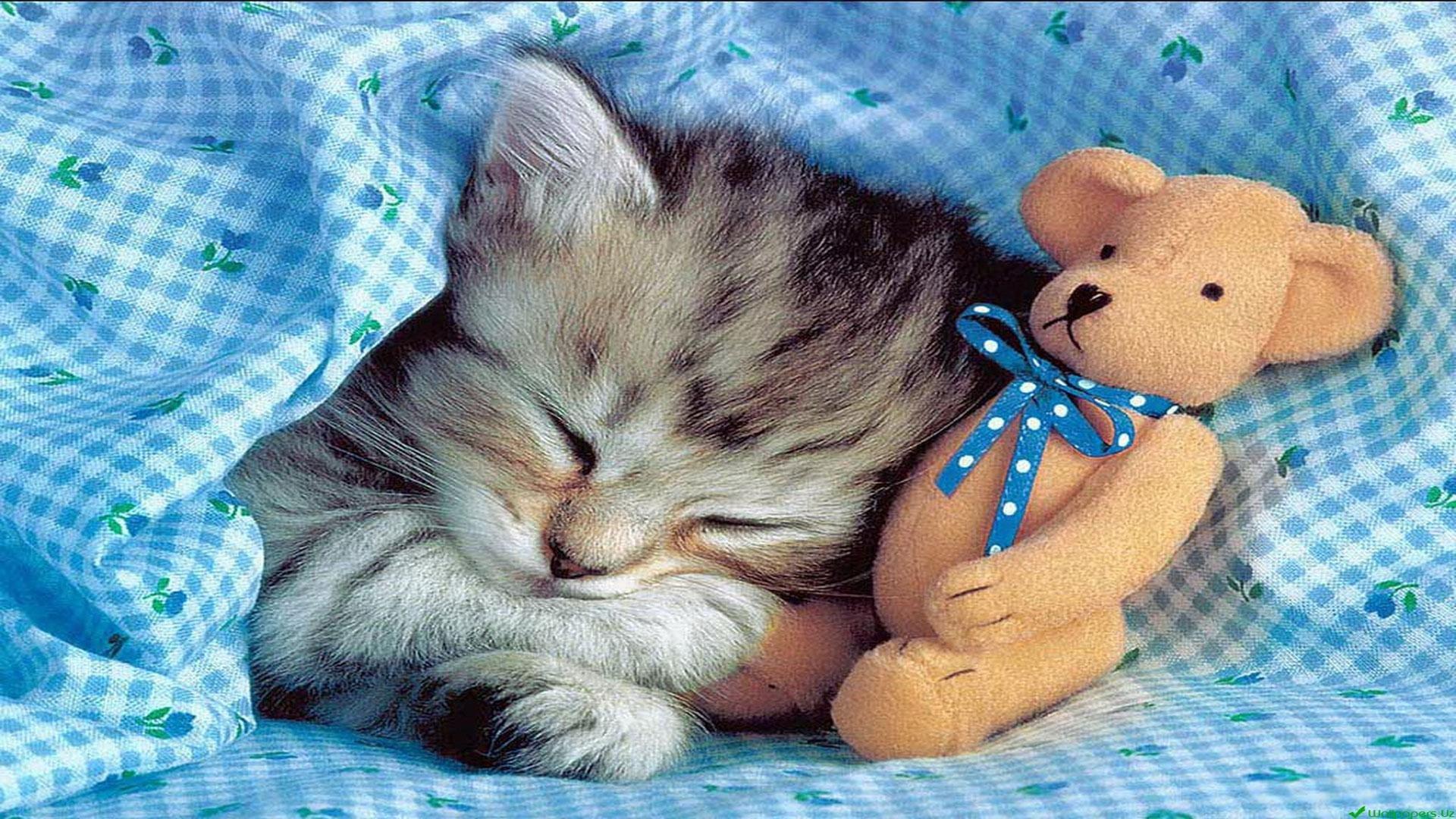 Встречу выпускников, открытка спокойной ночи котик