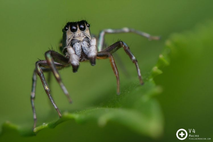 insects spiders nature macro closeup zoom wallpaper