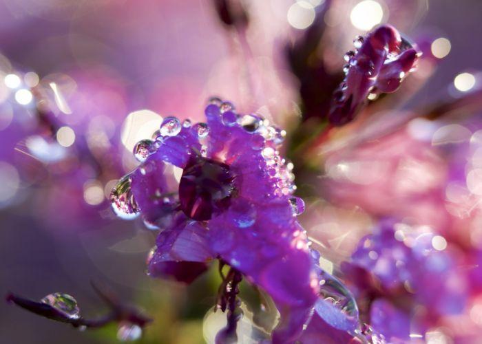 water drop macro nature macro zoom flowers gouttes pluie toile wallpaper