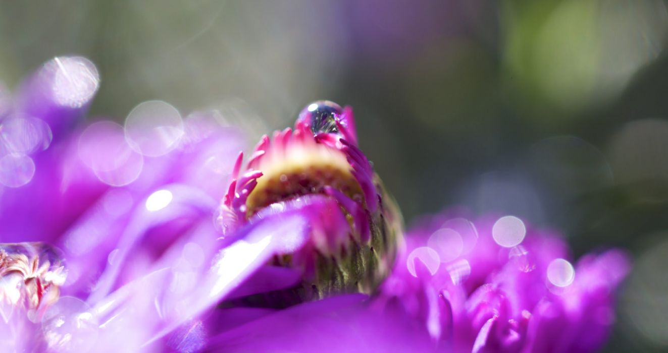 water drop macro nature macro zoom flowers gouttes pluie toile wallpaper
