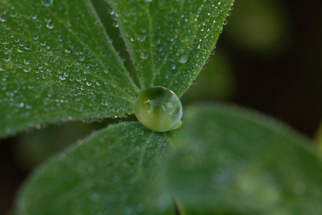 water drop macro nature macro zoom flowers gouttes pluie wallpaper