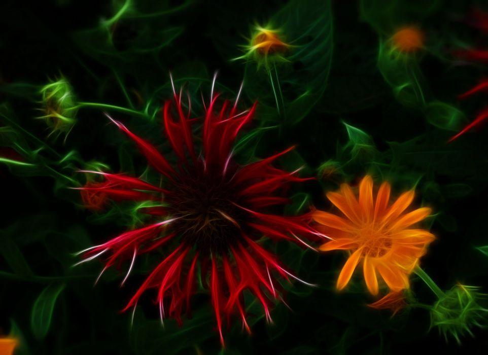 nature ART flowers cats fractal colors wallpaper wallpaper