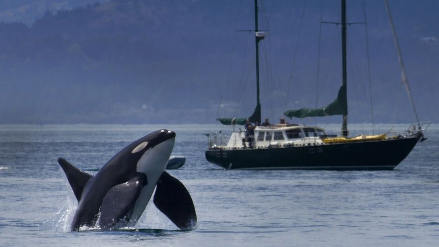 killer whale yacht orca ship boat wallpaper
