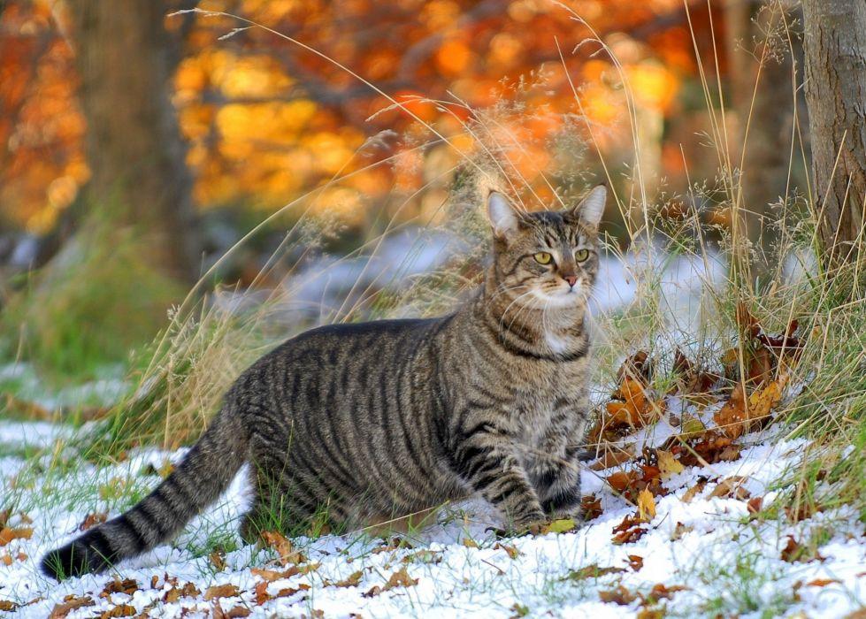 grass snow cat leaves winter wallpaper