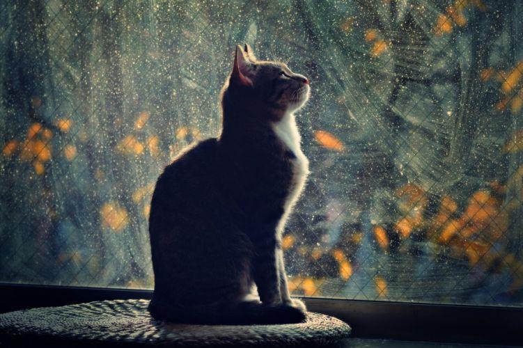 window night profile cat light mood glass wallpaper