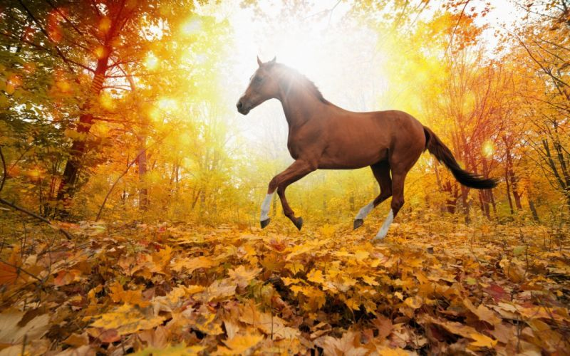 nature forest leaves fall horse wallpaper