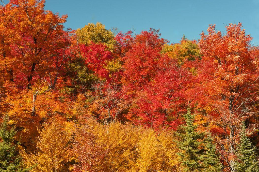 Algonquin Provincial Park Autumn wallpaper