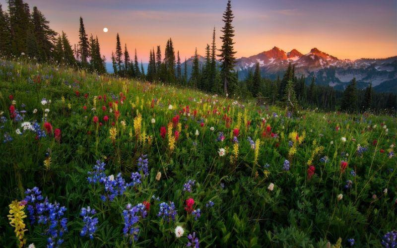 Nature grass flowers trees conifers mountain sunset wallpaper