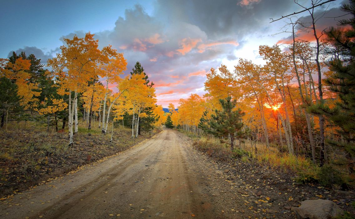 road forest trees autumn colorado colorado united states wallpaper