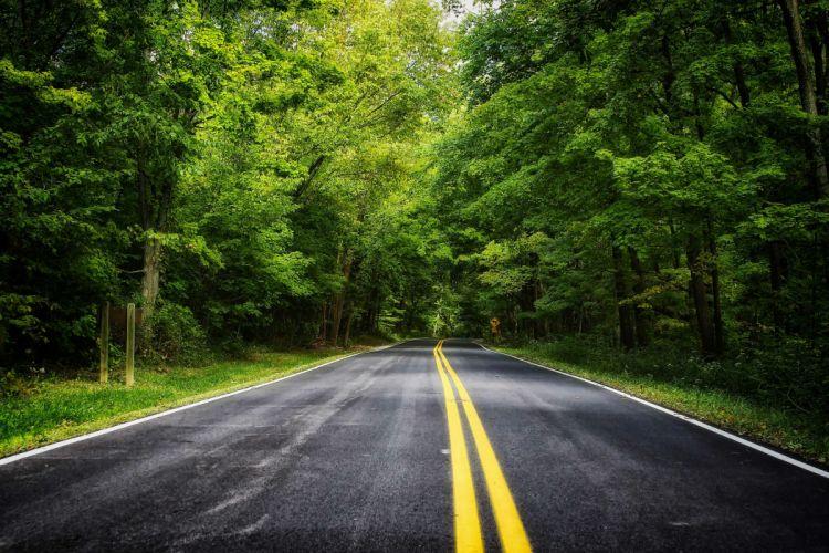road forest trees landscape wallpaper