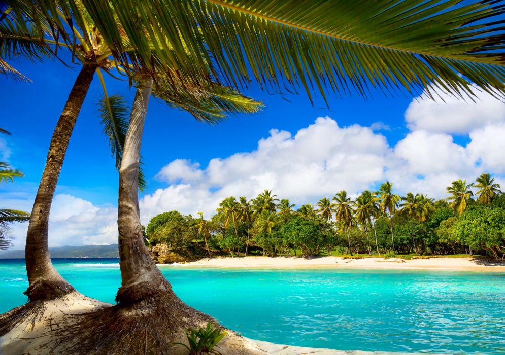 vacation beach summer tropical sea palms paradise ocean wallpaper