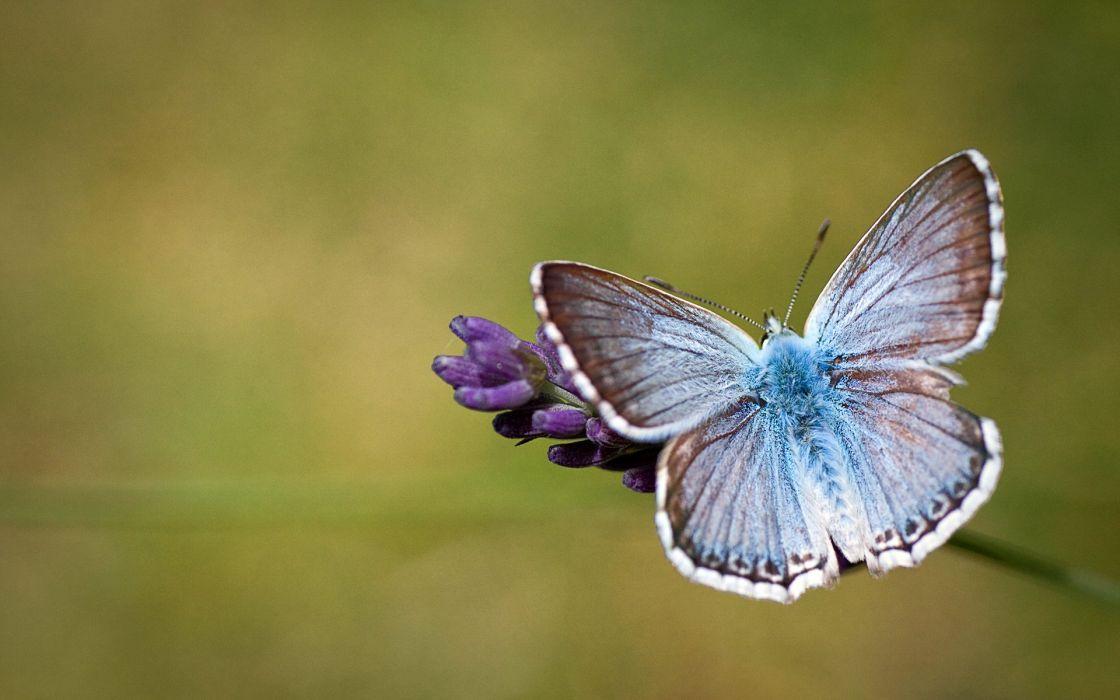 Butterflies Closeup Insects Animals moth butterfly wallpaper