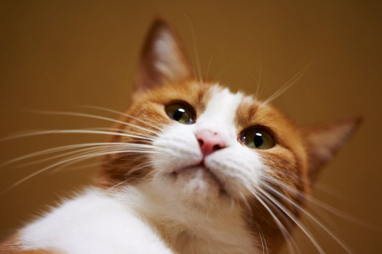 Cats Glance Whiskers Animals wallpaper