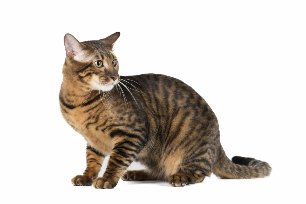 Cats Glance Animals wallpaper