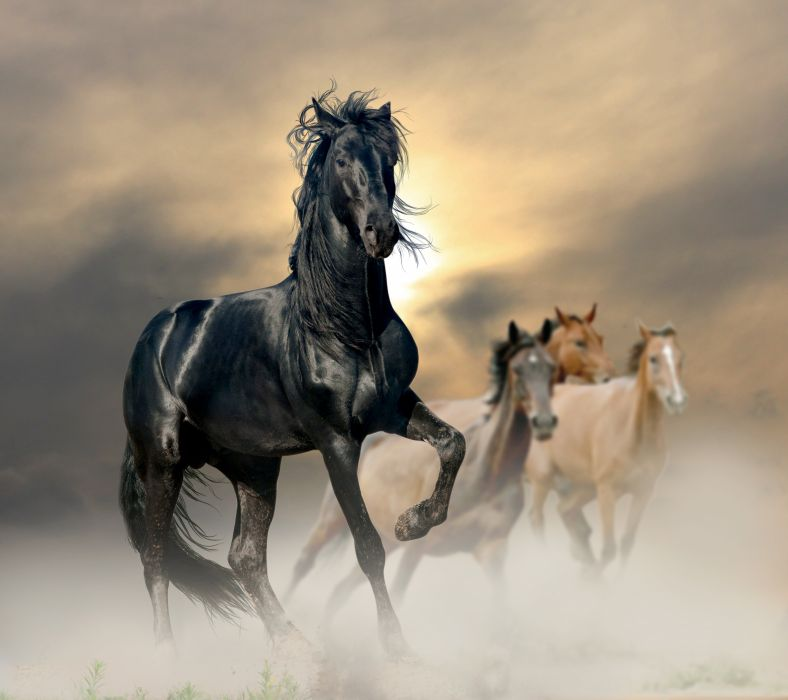 Horses horse d wallpaper