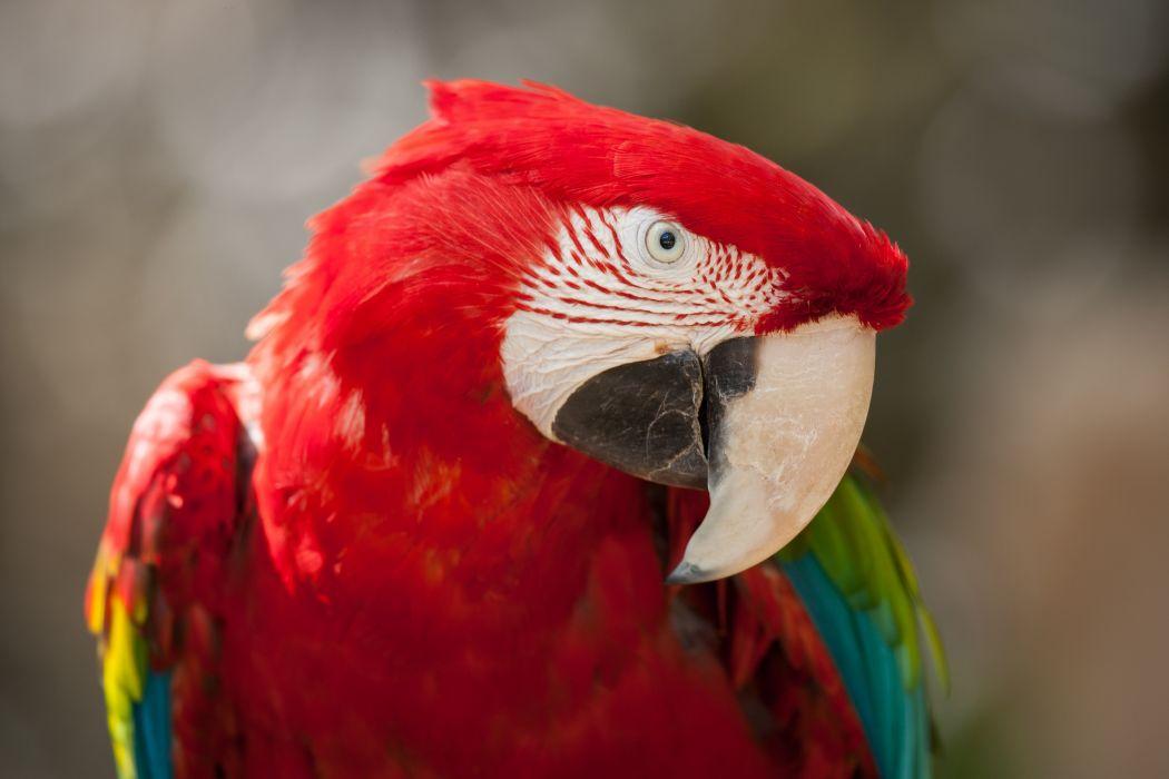Birds Parrot Beak macaw wallpaper