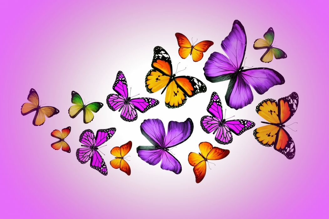 Insects Butterflies Animals butterfly bokeh f wallpaper