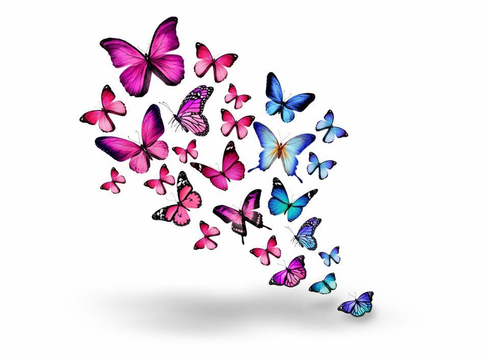 Insects Butterflies Animals butterfly bokeh z wallpaper