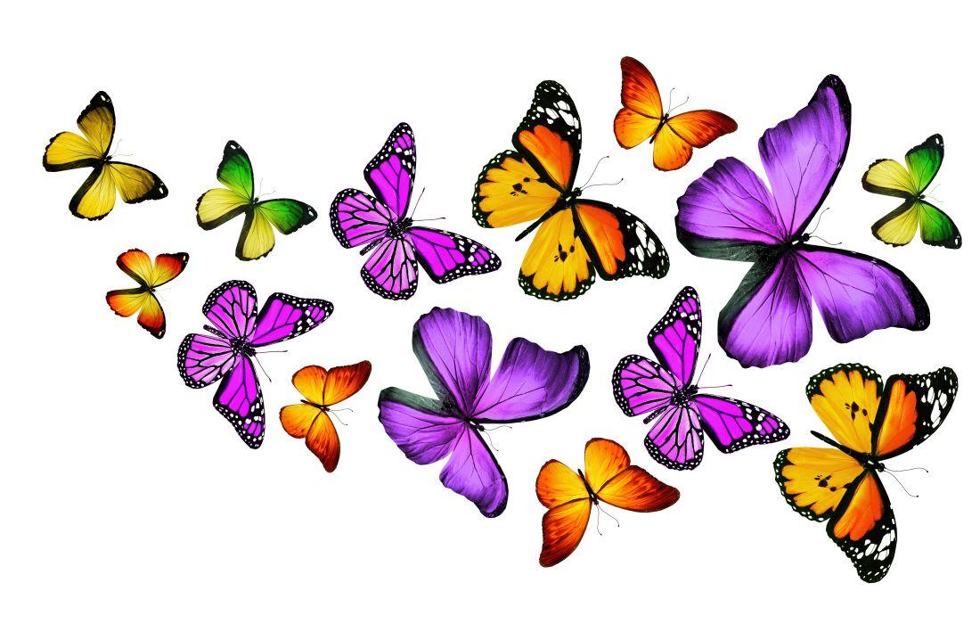 Insects Butterflies Animals butterfly bokeh s wallpaper