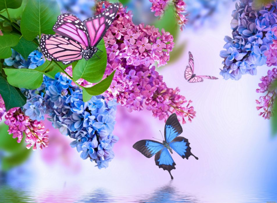 Insects Butterflies Lilac Animals Flowers butterfly wallpaper