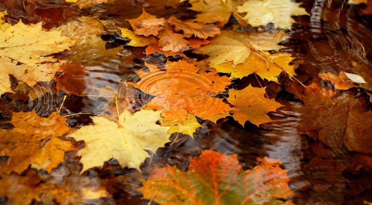 autumn trees nature landscape leaf leaves wallpaper