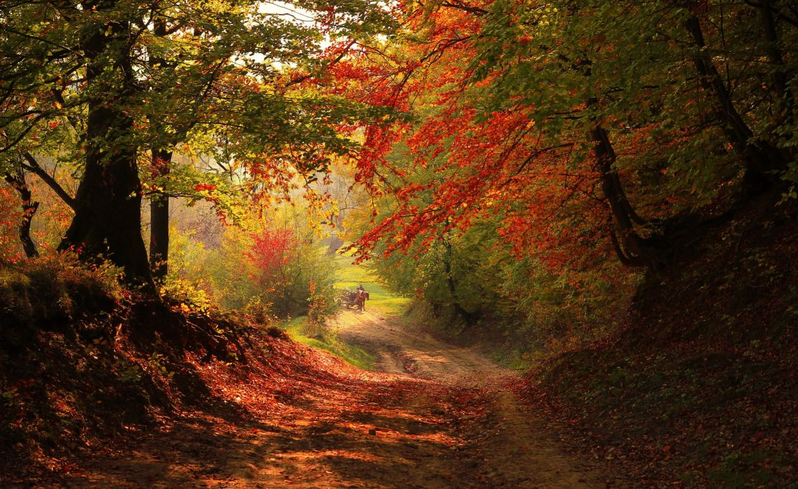 autumn trees nature landscape leaf leaves wallpaper