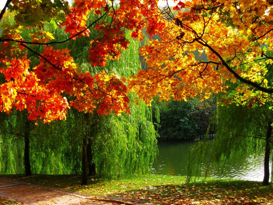 autumn forest trees fall river season colors wallpaper