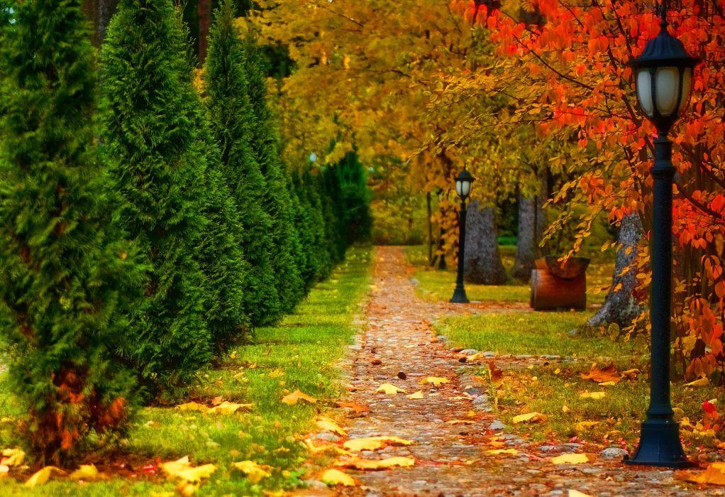 nature landscape autumn road trees lantern leaf wallpaper